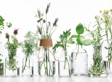 Imagen para la categoría Aromaterapia